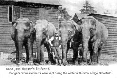 Sangers elephants 1905