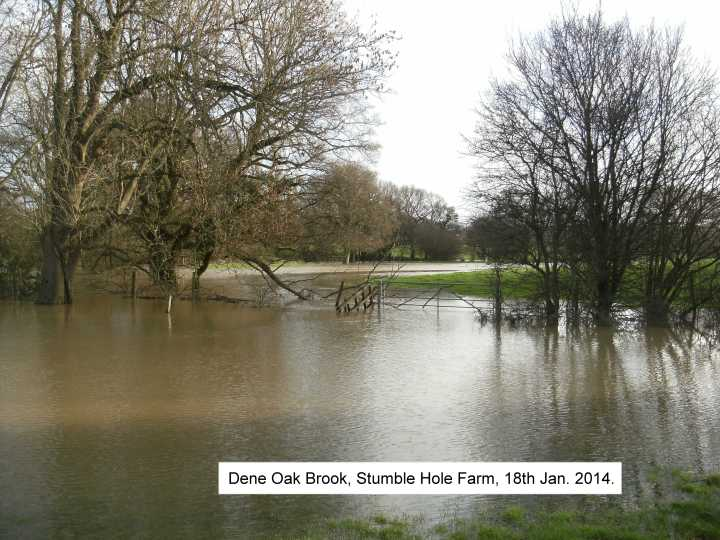 dene oak brook 2014 2