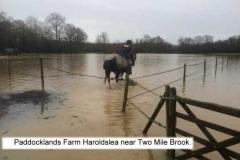 paddocklands 1